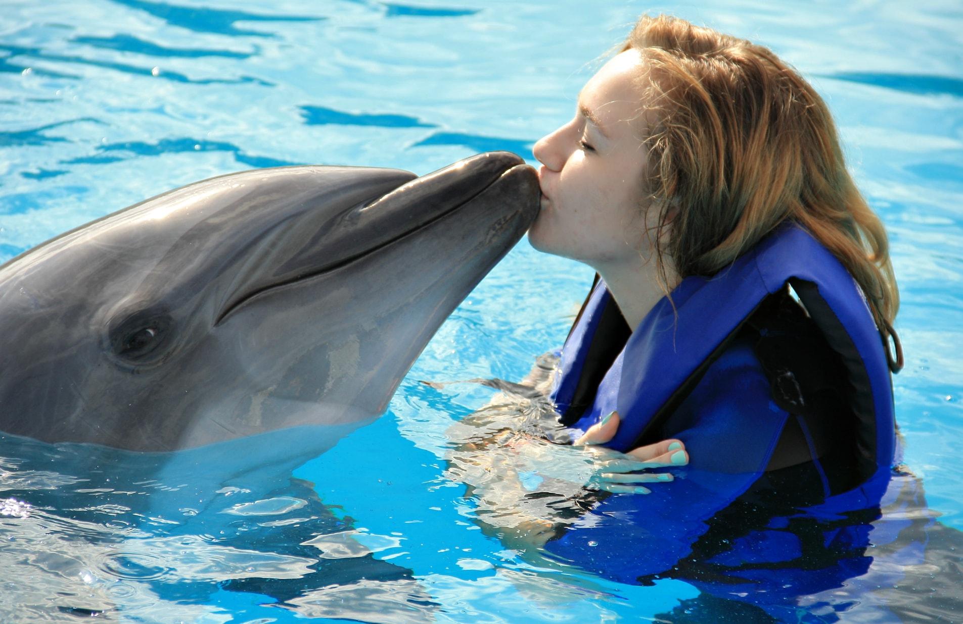 Nado con Delfines - Excursiones en la Riviera Maya