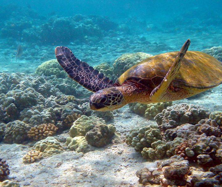 Akumal - Excursiones en la Riviera Maya