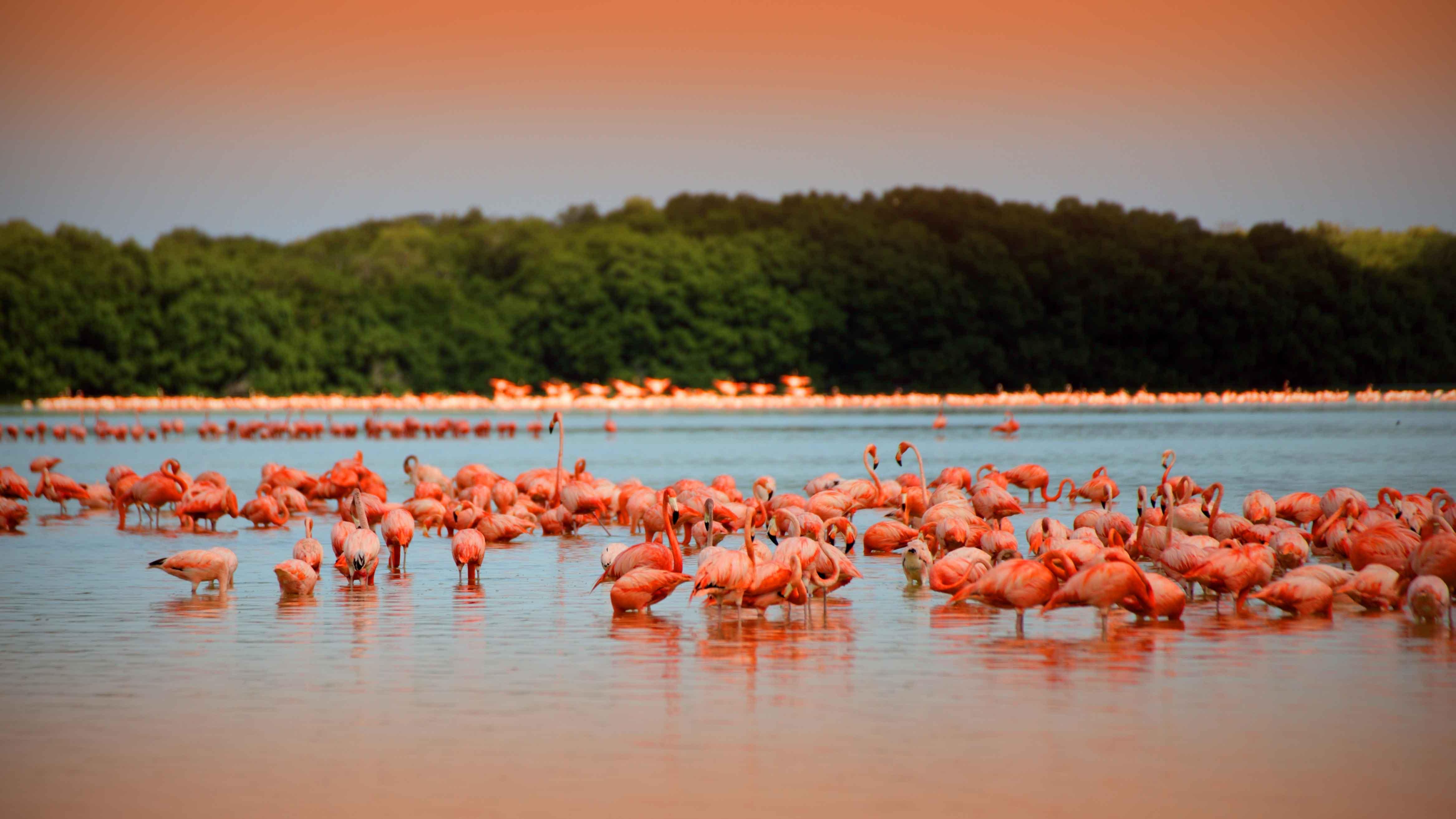 Las Coloradas, Excursiones en la Riviera Maya, Flamencos Rosados